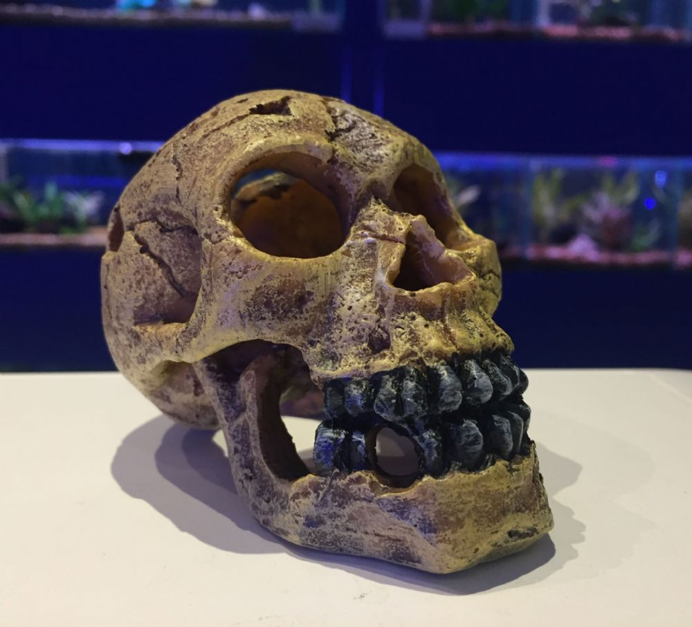Dark Skull with Black Teeth ~ Creepy Aquarium Ornament